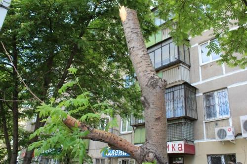 Город не досчитался нескольких деревьев. Два из них в центре города спилили вандалы