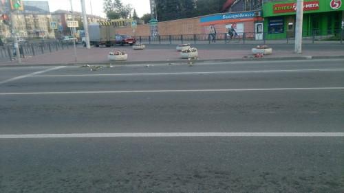 Город вандалов. Неизвестные сломали две молоденьких сосны в парке и повырывали цветы на перекрестке