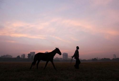 «Выйду ночью в поле с конём». В Башкирии вновь совершена крупная кража лошадей, которых нашли в Челябинской области
