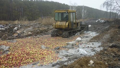 Раскатали бульдозером! На Южном Урале уничтожили более 414 тонн санкционных овощей и фруктов