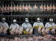 Чужие курицы границу не пройдут. Россия запретила транзит мяса птицы из США в Казахстан