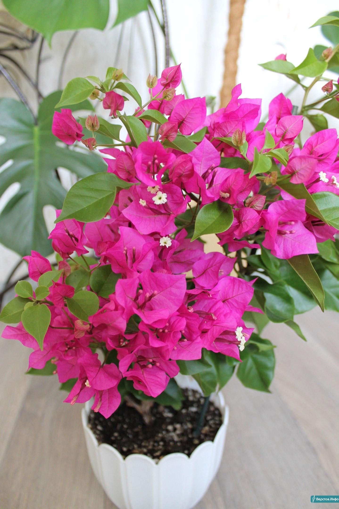 Комнатные цветы нашего края