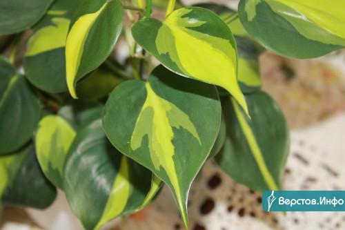 Комнатные растения на любой вкус. Цветоводы Магнитки приглашают горожан на выставку-продажу «Цветы для души»