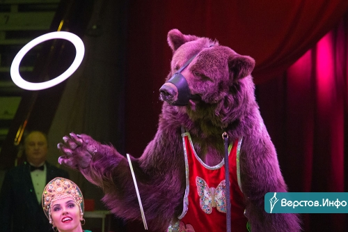 Акробаты, клоуны и звери. Уникальная цирковая программа пришлась по вкусу магнитогорцам