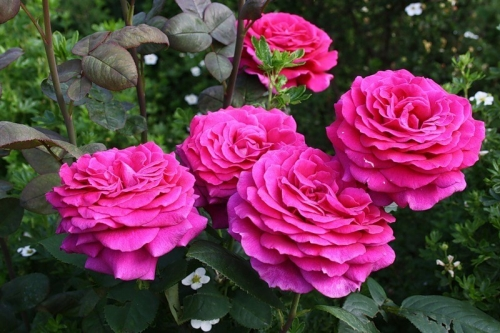 Когда приходит пора садовых участков... Цветочная ярмарка в помощь!