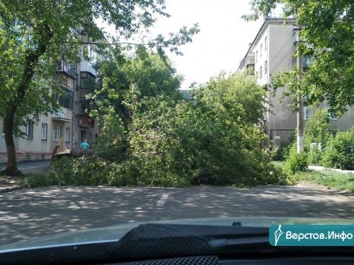 Прямо на автомобили. В Магнитогорске шквалистый ветер валит деревья