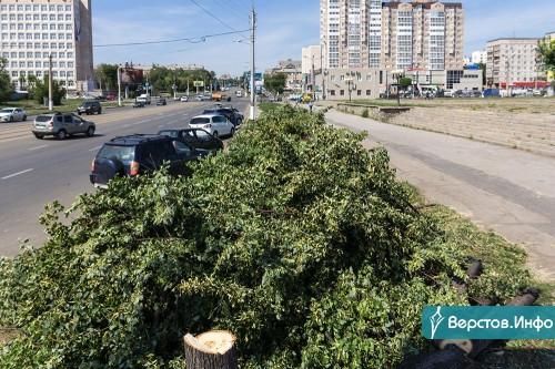 Там скоро будет бульвар. Магнитогорцы возмутились вырубкой деревьев на проспекте К. Маркса