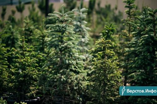 Зиму переживут. Питомник «Хвойный сад» открывает сезон посадки крупномеров