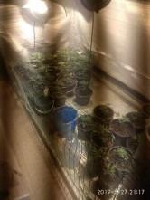 Насчитали 40 кустов. Магнитогорский наркофермер выращивал коноплю в собственной квартире