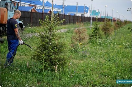 Зеленее и зеленее. В Магнитогорске занимаются не только вырубкой деревьев