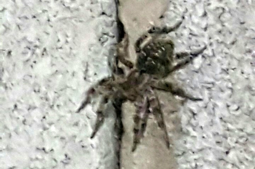 Не смертельно. Жительница Магнитогорска испугалась паука на стене гаража