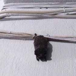«Горное ущелье» совсем рядом. Жители Магнитогорска наткнулись на медведя около детского лагеря в Башкирии