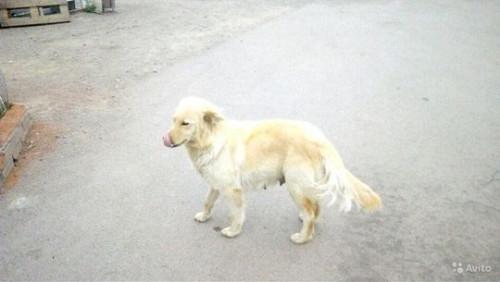 Садовод-изверг. Магнитогорец забил собаку вилами, привязал её тело к машине и увез в лес