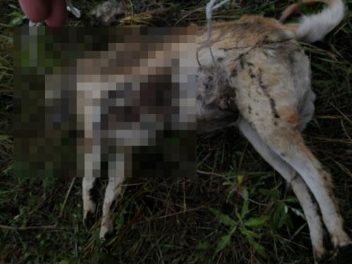 Зоозащитники нашли тело убитой магнитогорцем собаки. И написали заявление в полицию
