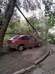 Не с кофе. Магнитогорский автомобилист неудачно припарковался около дерева