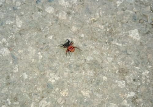 Это самец. В Магнитогорске сфотографировали паука из Красной книги Рязанской области
