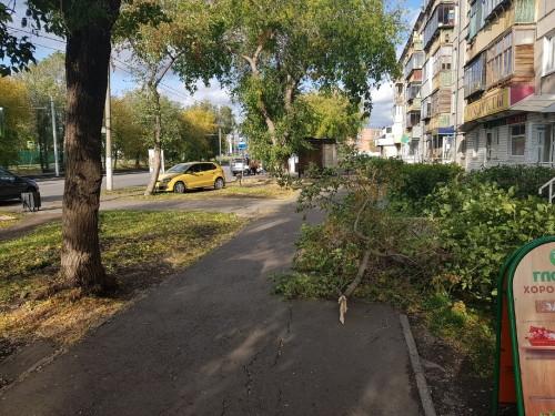 Ураганный ветер. На Доменщиков дерево рухнуло на ребенка, а на 50 лет Магнитки унесло остановку