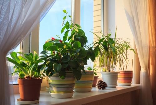 В Магнитогорске новый праздник – День цветовода. И не один день, а целых два!