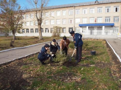 Посадили двухлеток. Инспекторы ГИБДД высадили деревья в пяти школах Магнитогорска