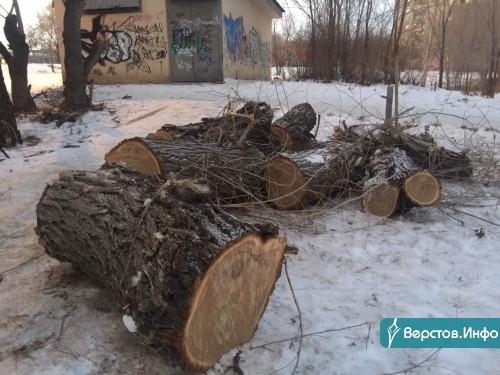 Будут рубить до 31 декабря! В Магнитогорске до конца года спилят деревьев почти на 15 миллионов рублей