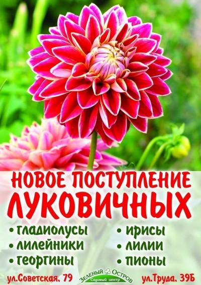 Ждем весну вместе! В наших силах ускорить ее приближение, а на помощь придут весенние цветы