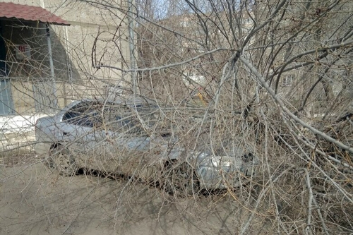 Санитарная обрезка не помогла. В Магнитогорске во дворах ветром сносит старые деревья