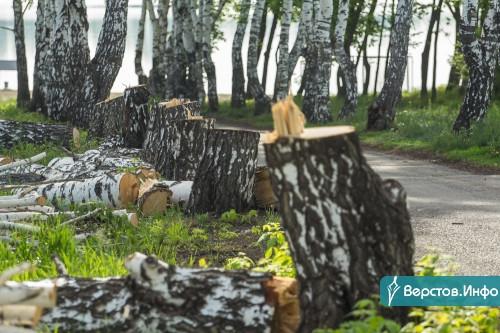 Лес рубят – щепки летят. В Магнитогорске начался второй этап реконструкции парка