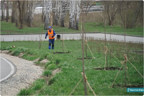 Зазеленеем! В Магнитогорске продолжат высаживать крупномерные деревья