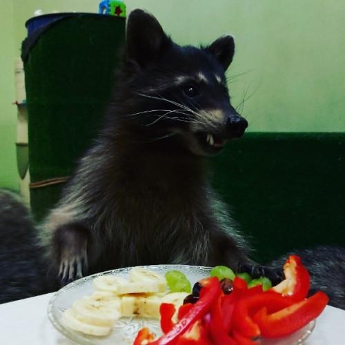Всех енотов накормили досыта. «Хижину енота» поддержали блогер и предприниматели Магнитогорска