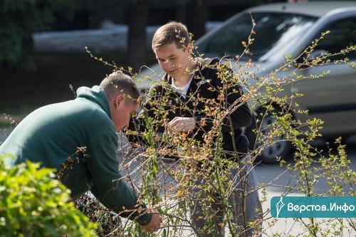 В Магнитогорске за летний сезон деревья поливают до 14 раз. А ещё подкармливают и пропалывают