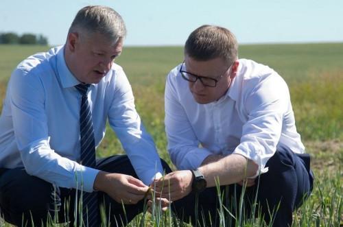 Аномальная жара уничтожила часть посевов. Губернатор пообещал аграриям Челябинской области поддержку