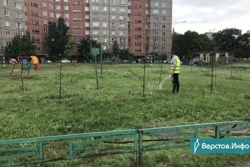Молодые – поливают, аварийные – сносят. Осенью в Магнитогорске начнут активно высаживать деревья