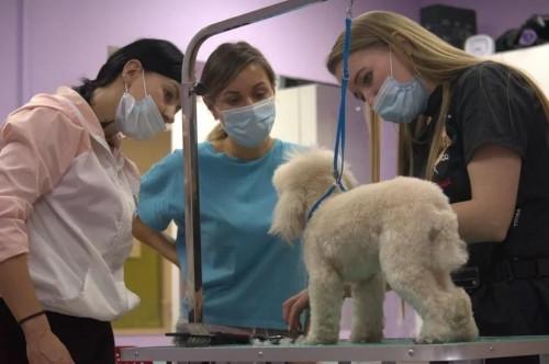 Карьера в мире животных. Магнитогорцы могут освоить новую перспективную профессию, дарящую позитив