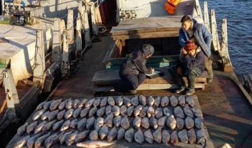 1 000 лещей! Магнитогорские браконьеры задержаны в Верхнеуральском районе